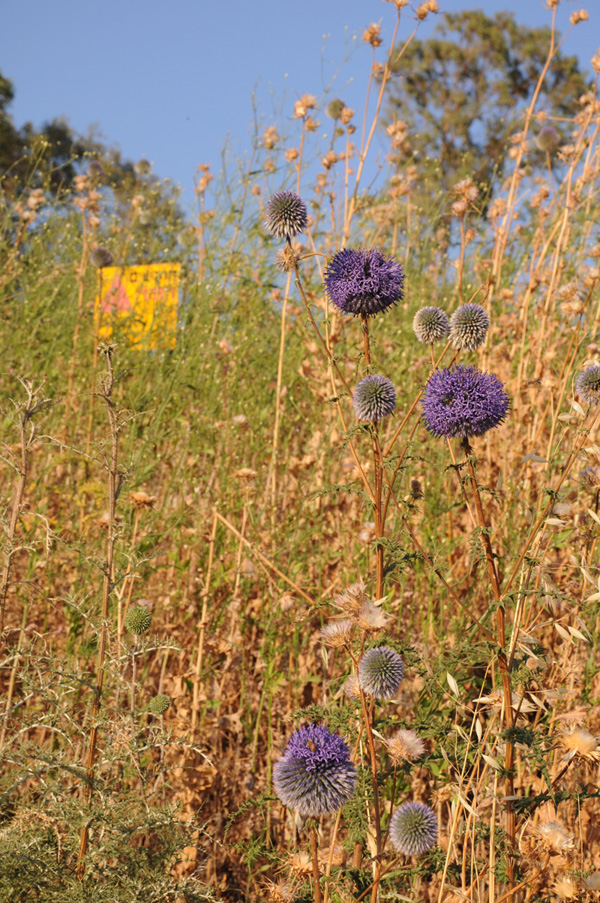 מוקשים בשדה לצד הכביש בגולן